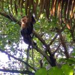 Capuchin monkey joined us for breakfast on our last day