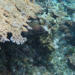 Foto di Banana Reef