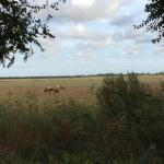 meadow with horses near casa