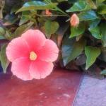 Hermosas flores adornan el hotel