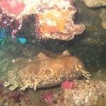 Find the Wobbegong