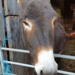 Huntlands Farm Bed & Breakfast Foto
