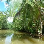une petite ballade dans la jungle avec Andrew