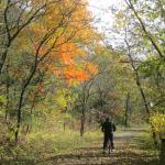 Fall Biking on the Root River Trail