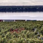 View of the Ventosa Winery vineyard