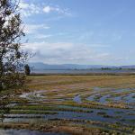 Vista desde las habitaciones: arrozales y laguna.