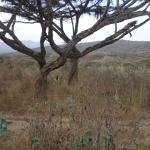 Ang'ata Camp Ngorongoro Foto