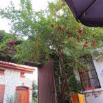 Гранатовое дерево во внутреннем дворике