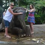Elephant Ride By ponk Bali Horizon Tours
