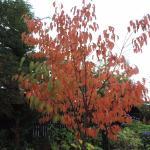 Photo de Inverness Botanic Gardens