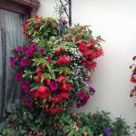 Amazing hanging baskets
