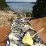 Melshell Shell Oysters