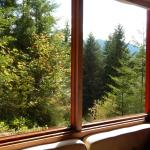 Photo of Deep Forest Cabins at Mt. Rainier