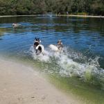 Two of my dogs splashing in the lake!