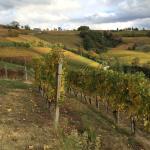 Photo of Agriturismo Il Ciliegio