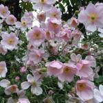 Beautiful flowers in bloom!