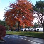 Beautiful tree at the car dealership next door