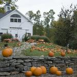 Pick-Your-Own Pumpkins Every Fall!