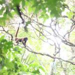 Spotting monkeys in the canopy