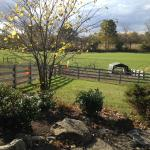 """View from the """"barn"""" /common area/dining area"""