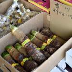 タケノコ芋という初めて見るものを買いました