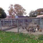 East Hill Farm