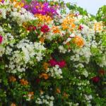 Цветы у стен  отеля