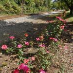Railroad tracks run parallel to Frankfort Avenue