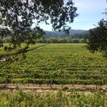 Shaded picnic area overlooking vineyards-- gorgeous!