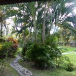 Vue sur Jardin et sur la rizière