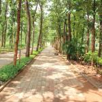 Pathway lined with teak trees