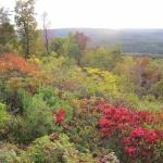 Celebrating autumn at King's Bluff
