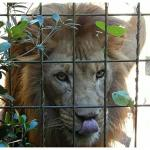 Greenville Zoo