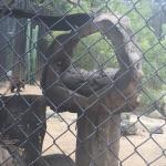 Orange County Zoo Photo