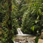 L'eau se faufile au milieu d'une végétation luxuriante