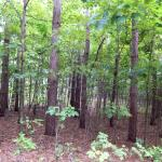 Lots of views of a dense hardwood forest