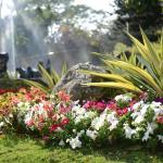 花季植栽-2