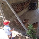 Thessaloniki Zoo张图片