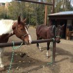 Trail Horses!