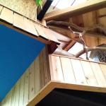 Treehouse Skye Foto