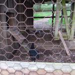 Photo de Turtleback Farm Inn