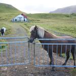 ホテルの裏に人なつこい馬がたくさんいます