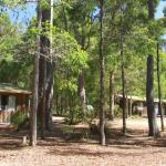 Cabins are set in natural bush environment