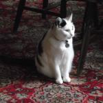 The Pub Cat