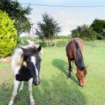 Vue sur les poneys