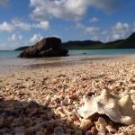 Shells on an antiguan Beach