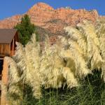 Les montagnes du Zion P.
