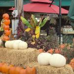 Kirkwood Farmers' Market