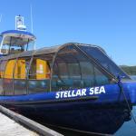 bateau observation ours