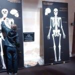 Verschil tussen moderne mens en Neanderthaler